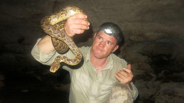 In einer Höhle findet Steve Backshall eine kubanische Boa ... © Nick Allinson...