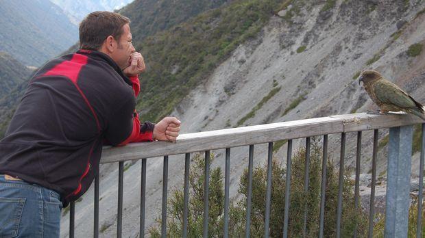 Steve Backshall findet heraus, wie intelligent der Bergpapagei Kea tatsächlic...