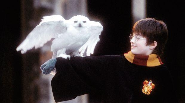 Harry Potter und der Stein der Weisen - An seinem elften Geburtstag erfährt H...