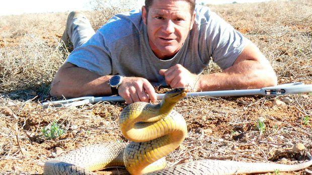 Steve Backshall hat im australischen Outback nicht nur mit der gnadenlosen So...