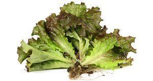 Gesunde Rezepte & Lebensmittel_2015_08_08_Salate zum Abnehmen_Bild 1_foto...