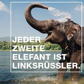 22.02_Engagement_Elefanten Linksrüssler