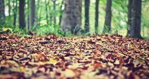 Die Natur macht es vor: Die verrottenden Blätter bieten dem Boden Schutz und...