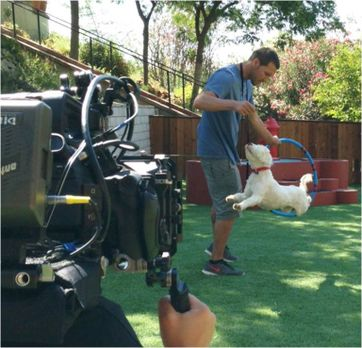 Der Hundetrainer - Lucky Dogs mit Brandon McMillan - Nachdem Brandon McMillan...