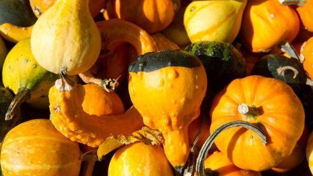 Kürbis-Kürbisse-Kürbiszeit-Herbst-Halloween