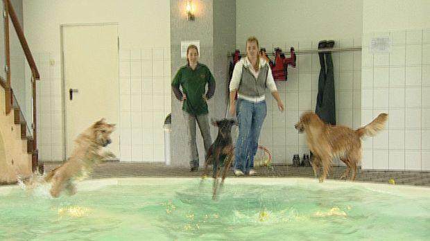 Ca. fünf Millionen Hunde leben in Deutschlands Haushalten. Was, wenn Frauchen...