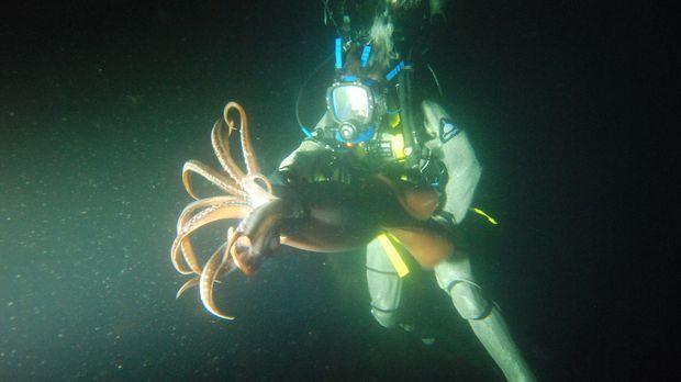 Unter Wasser trifft Steve Backshall auf einen Riesenkalmar ... © James Bricke...