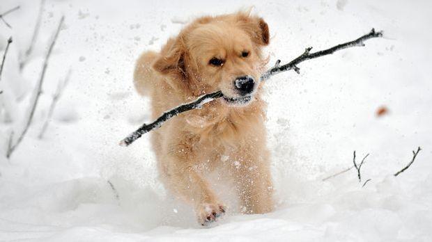 Hund Schnee_dpa