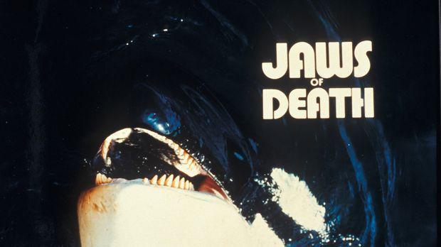 Auge um Auge, Zahn um Zahn: Angriffslustige Haie und Wale rächen sich an Tier...