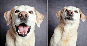 adopted-dog-teton-pitbull-humane-society-utah-25