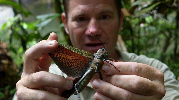 Im Dschungel entdeckt Steve Backshall eine Vielzahl von unglaublich schönen T...