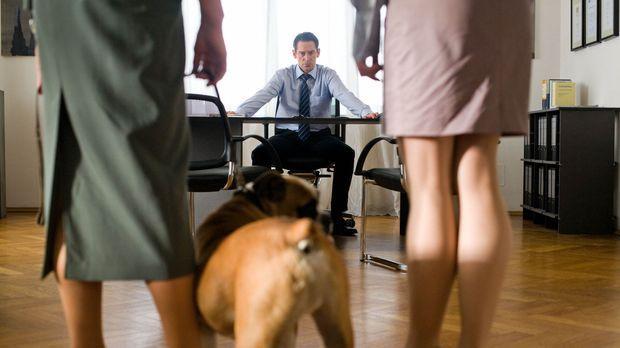 Allein mit den zwei Kindern, einem Hund, den er nicht ausstehen kann und eine...