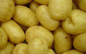 ein Haufen rohe Kartoffeln