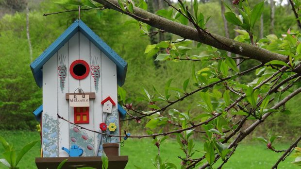 Vogelhaus-Nistkasten-pixabay