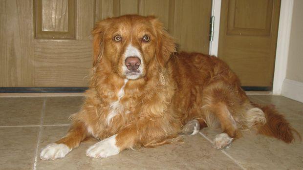 Der Hundeflüsterer Cesar Millan kümmert sich unter anderem um die kanadische...