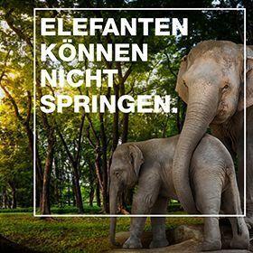 21.02_Engagement_Elefanten springen