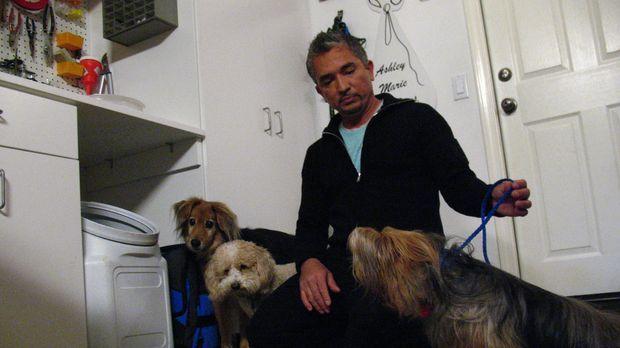 Heute erzählt Hundeflüsterer Cesar Millan seine schönsten Erlebnisse aus den...