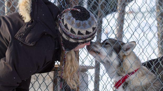 Zwischen Kate und ihren Schlittenhunden besteht eine innigliche Beziehung ......