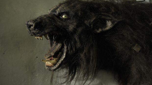 Mordlustige Werwölfe lauern überall ... © Phillipe Bosse 2013 B.H. 2 Producti...