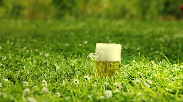 Bier im Gras