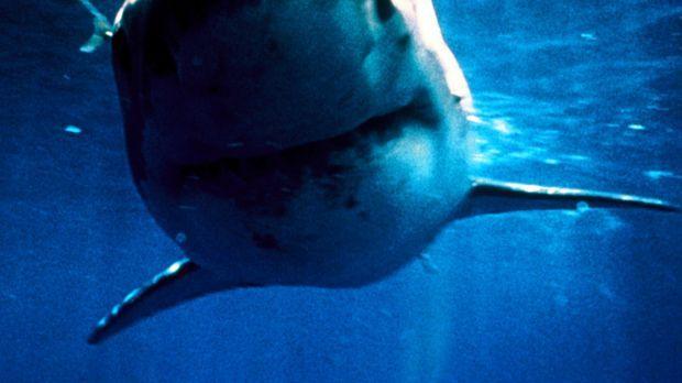 Shark Zone - Tod aus der Tiefe - Seit vielen Jahren attackieren Haie jeden, d...