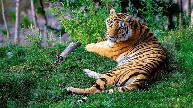 Chinesisches Horoskop 2016_2016_03_15_Chinesisches Horoskop 2016 Tiger_Schmuc...
