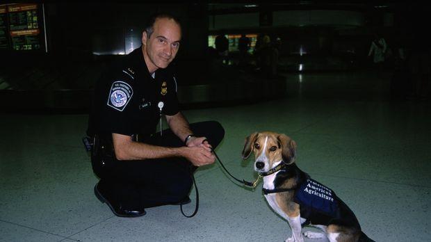 Der Hund gilt als bester Freund des Menschen. Unzählige Züchtungen gibt es in...