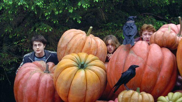 Noch wissen Harry Potter (Daniel Radcliffe, l.), Ron (Rupert Grint, r.) und H...
