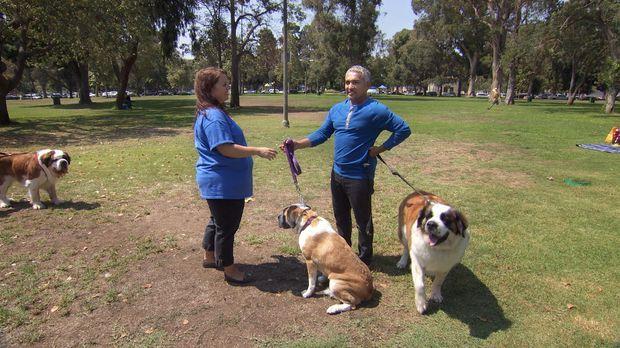 Wird es Cesar (r.) gelingen, die beiden Hunde Phoebe und Levi zu beruhigen un...