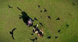 Zoo - Staffel 1 Episode 9: Im Visier Der Vögel