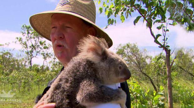 Tamme Hanken - Tamme Kuschelt In Australien Mit Koalabären